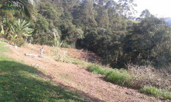 Muita área verde